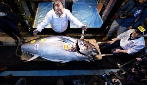 'Raja Tuna' Labur RM7.38 Juta Dapatkan Tuna 276 Kg