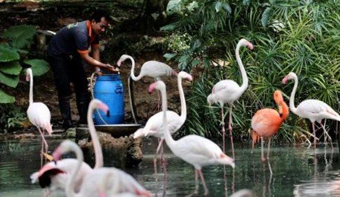 Zoo Negara Pastikan Haiwannya Tak Dijangkiti COVID-19