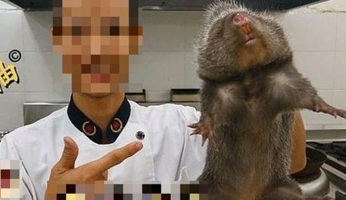 Tikus Besar Membiak Di China, Jadi Daging Pilihan Cef