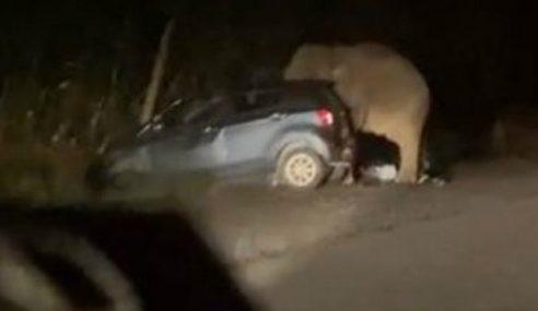 Gajah Mengamuk Pijak Kereta