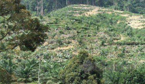 Agrobank Tak Lulus Pembiayaan Kebun Durian Haram