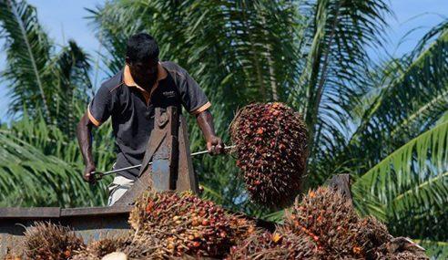 Buruh Paksa Bukan Lagi Isu Sawit Negara Ini