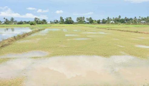 RM80 Juta Bantuan Bencana Pertanian, Musim Tengkujuh